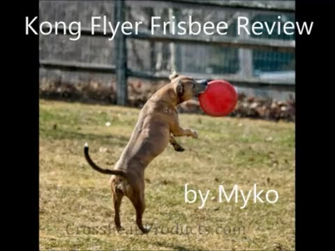 Kong Flyer Frisbee Dog Toy Review