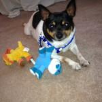 Cross Peak's dog of the week