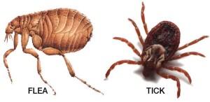 flea-tick