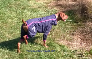 hurtta-dog-raincoat-field-test-review