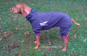 hurtta-slush-combat-suit-dog-raincoat