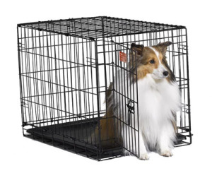 midwest-dog-crates-icrate-wire-dog-crate-