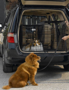 suv-dog-crates
