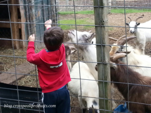 boy-feeding-animals-petting-zoo