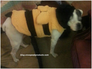 halloween-costumes-for-dogs-bumblebee-costume