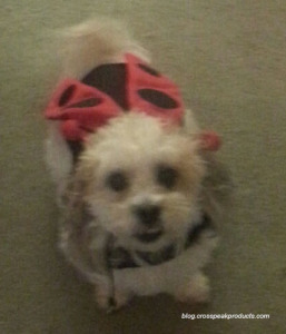 dog dressed up for Halloween-ladybug-costume