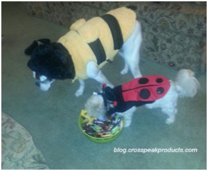 dogs-dressed-up-for-Halloween-costumes