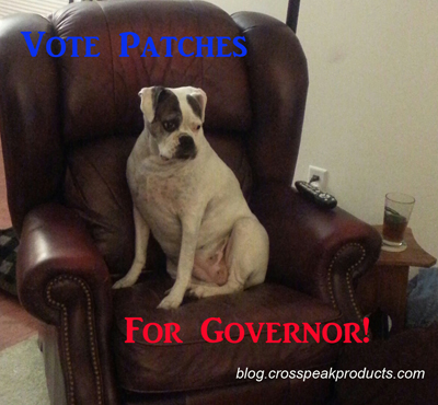 dog-runs-for-midterm-elections