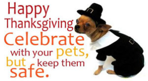 thanksgiving-safety-tips-for-dogs