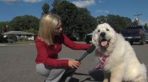 dog-voted-mayor