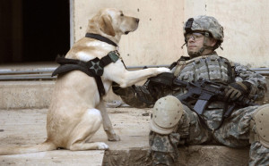 military-dogs-guide-dog-for-soldier