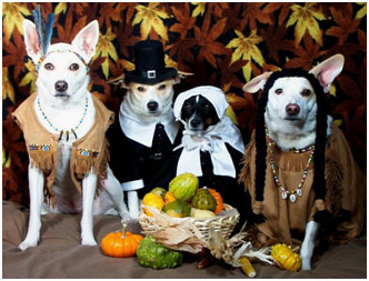 thanksgiving-dogs-dressed-pilgrim-costumes