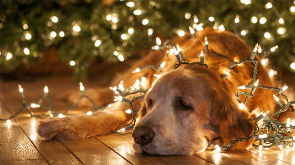 christmas-lights-dogs