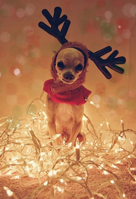 dog-with-reindeer-hat
