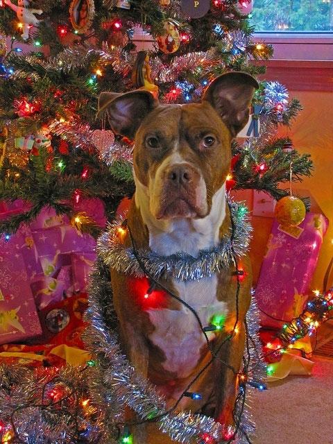 dog-wrapped-Christmas-lights