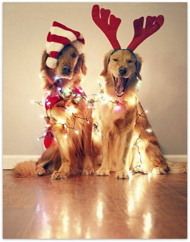 dogs-dressed-up-for-christmas