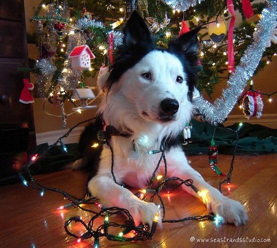 festive-dog-photo