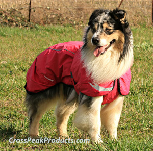 Australian Shepherd wearing Hurtta Torrent Coat