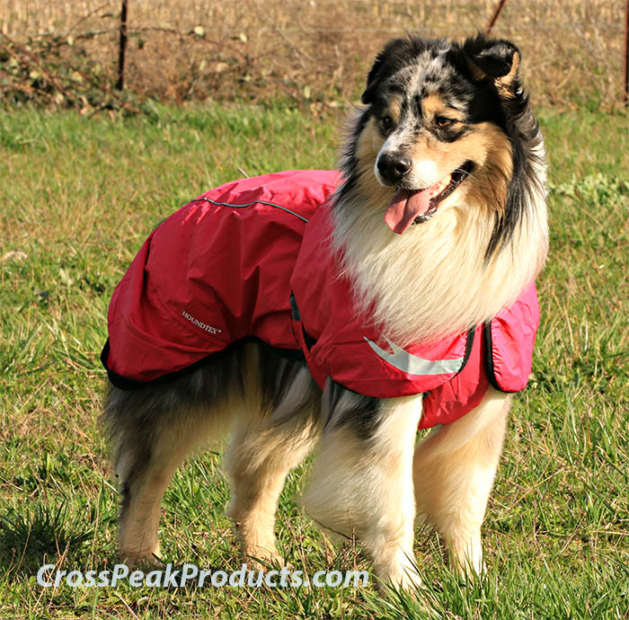 Hurtta Torrent Coat Review – Excellent Dog Rain Jacket