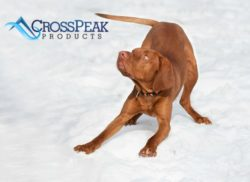 vizsla-outdoor-dogs-blog