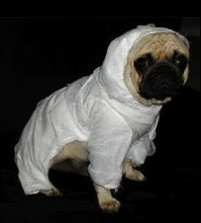 Mummy Dog Costume