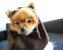 Ewoks Dog Costume