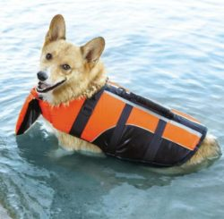 Best gift ideas for dogs this Christmas Life Jacket with Head Support