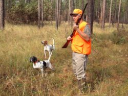 Keep Your Dog Safe and Visible for Hunting Season