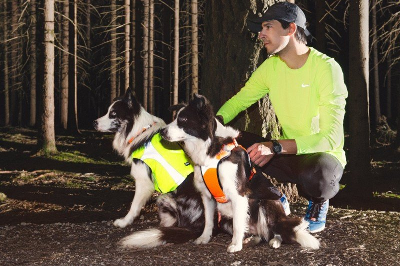 Dog Vests for Hunting Season